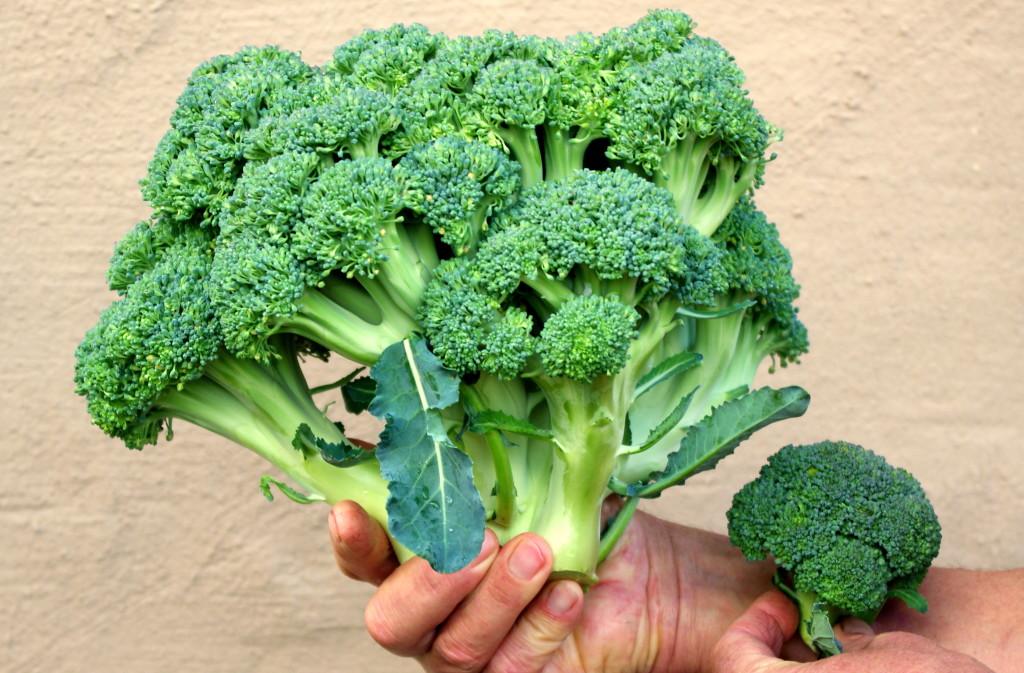 Big little brocolli