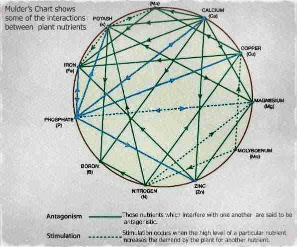 Muldars chart